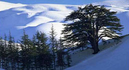 The Cedars - Lebanon